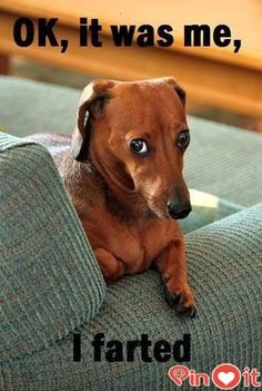 This is the face my brothers dog Drakken made all last week when he would fart…