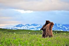 Alaskan Brown Bear Pictures - National Geographic