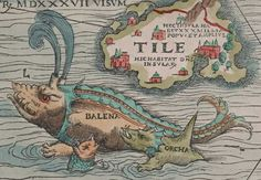 A-detail-of-the-Balena-calf-and-Orca-from-Olaus-Magnus's-'Carta-Marina'.jpg (780×539)