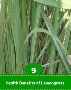 Health Benefits of Lemongrass | Medi Tricks