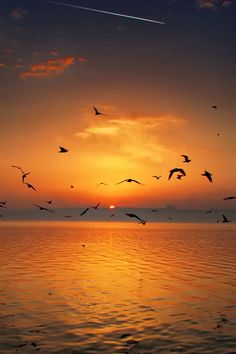 Sunset Birds – Amazing Pictures - Amazing Travel Pictures with Maps for All Around the World