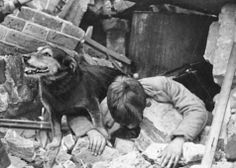 In the 12 month period of 1940-1941, the Blitz stray dog Rip (discovered by civil defence rescuers on the loose in Poplar, East London after an air raid) sniffed out 100 trapped casualties in London rubble.