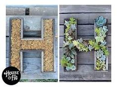 Image result for succulent wall