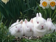 I love the petrified look on the third wabbit's face!