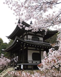The Great Buddha at Tōdai-ji Buddhist temple Nara Japan 奈良県の大仏 Aesthetic Japan, Japanese Aesthetic, Flower Aesthetic, Japanese Style, Sakura Cherry Blossom, Cherry Blossom Flowers, Japanese Temple, Asian Architecture, Japan Art