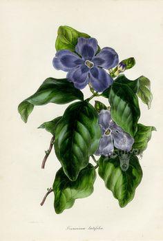 Gallery.ru / Paxton Magazine Botany 1834 - Ботаника - tatasha