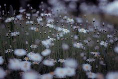 beautiful mind - Delicate flowers.  beautiful flowers.  it is your heart that is beautiful.  appreciating something beautiful as beautiful.