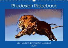 Rhodesian Ridgeback der Hund mit dem Tropfen Löwenblut - CALVENDO