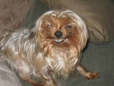 """This lovely smile. 
