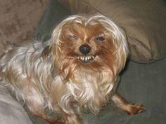 Ce sourire charmeur. | 31 photos d'animaux complètement improbables