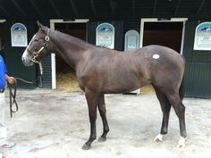 $1.2 million yearling Tapwrit, now a Belmont Stakes winner