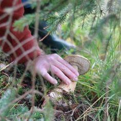 Oregon Mushrooms - Wild Foraging