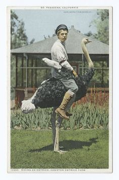 Riding an Ostrich, Cawston Ostrich Farm, South Pasadena, Calif.