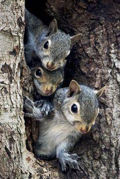 Peek - a- boo!