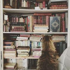 Sunday mood  Un bon bouquin et au lit ! Le plus dur sera de choisir  #instadaily #catsagram #bookstagram #bookshelf #bookworm #interiordesign #interiør #introvert #readinglist #homedecor #vintagedecor #decoration #catsofinstagram #interiorinspo #organizedchaos https://ift.tt/2rEQbfL