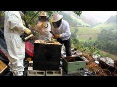 http://www.permapicultura.com Este video muestra testimonios graficos de la tecnica de Oscar Perone llamada Permapicultura basada en la permacultura.