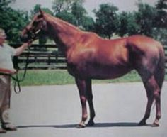 Snuggle:sired by Nijinsky, and dam of Belmont winner Colonial Affair