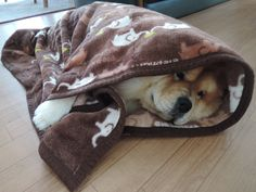 """chow29dora: """" 急に寒くなった。It suddenly got cold these days. """""""