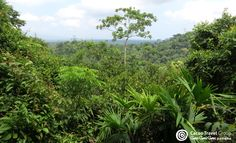Darien's rainforest is still relatively untouched in the comarcas and in the large National Park, and wildlife still includes remarkable and endangered species such as tapirs, jaguars and the elusive harpy eagle. #Darien #Panama #Rainforest #Trekking #Wildlife #SelvaTropical