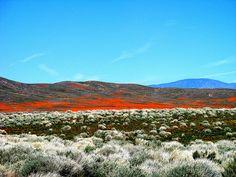 Deserto de Mojave na primavera | por Rennett Stowe