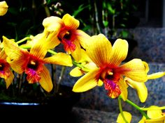 I think those are vanda. Love the colors