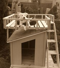 My dog would LOVE this doghouse. Perfect for laying in the sun OR resting in the shade in the doghouse.