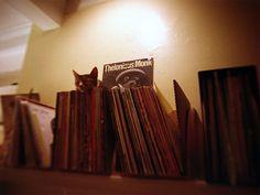 cat & records
