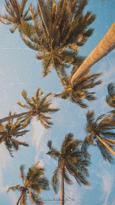 brown leaves photo – Free Sunlight Image on Unsplash Beach Wallpaper, Tree Wallpaper, Wallpaper Ideas, Wallpaper Backgrounds, Aesthetic Backgrounds, Aesthetic Wallpapers, Palm Tree Pictures, Image Nature, Clear Blue Sky