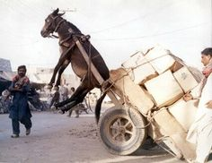 There is nothing funny in this photo. An animal expected to carry a weight heavier than its own body weight, until it dies or is slaughtered because it can no longer do the work is incredibly inhumane and sad. This abuse of working animals should be illegal.
