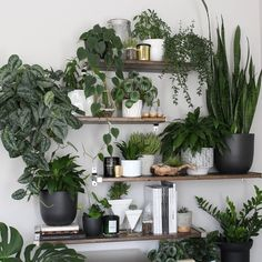 "9,424 Likes, 112 Comments - Darryl Cheng ~ (@houseplantjournal) on Instagram: ""#tbt a few weeks ago when I visited @melissamlo and her amazing plant shelf, built by her husband.…"""
