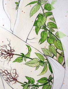 """A história através das ervas """"Tudo começou quando o homem primitivo, exausto de suas andanças, parou para descansar um pouco e de repente percebeu que as sementes caídas dos frutos maduros tinham brotado (...) (Techo do livro """"As ervas do sítio"""", Rosy L.Bornhausen) Arte: Stasia Burrington (detalhe) Curadoria: Matricaria"""