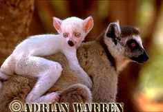 Albino Animals | Dusky's Wonders