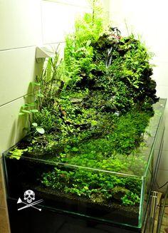 Paludarium or aquarium?