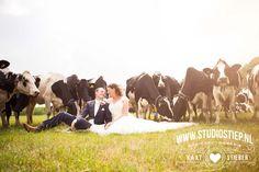 Holland: bruidsfotografie - wedding photography #koeien #cows #wedding couple