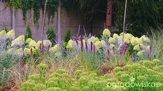 Ogród w remoncie - strona 1004 - Forum ogrodnicze - Ogrodowisko Garden Ideas, Plants, Flora, Plant