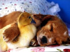 Me and my Ducky...