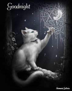 White cat with web ✿ ☂. Cool Cats, Image Chat, Photo Chat, Witch Cat, White Cats, Black Cats, Cat Drawing, Halloween Cat, Halloween Ideas