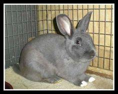 Buck #bunny #rabbit #rescue #gainesville