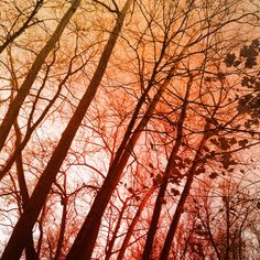 One of my Instagram shots from this past fall. #trees #art #photography #nature