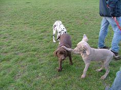 Spelen met vriendjes in het Reeshofpark