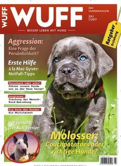 #Molosser: Couchpotatoes oder richtige #Hunde?  Jetzt in wuff magazin:  #Hunderasse #Hund