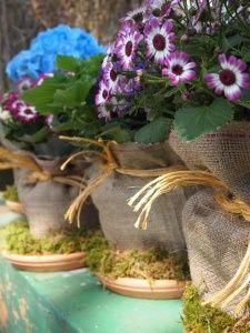 Disguise supermarket plastic pots with burlap and moss garden-arrangements