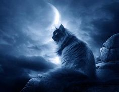 A cat by the light of the moon - mystical and ethereal!