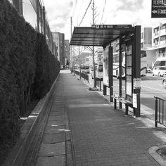 Остановка автобуса на бульваре Китаяма. Какой-то заботливый садовник выстриг часть живой изгороди чтобы на поребрик можно было присесть если на скамейке не останется мест.  #остановка #автобус #поребрик #скамейка #Китаяма #Киото #автобуснаяостановка #Япония  #этоЯпония #быт #улицы #город #Kyoto #Japan #Kitayama #busstop