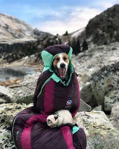 #Fotografía: Las Grandes Aventuras de Henry y Baloo - #Dogs #Cats #Paisajes