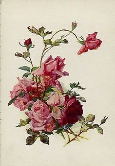 berengia:  victorian style roses