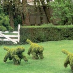 Running dogs topiary.