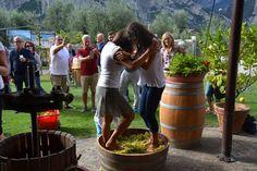 Tempo di #vendemmia nell' #autunno #trentino con i nostri ospiti a #CantinaPisoni #ValleDeiLaghi