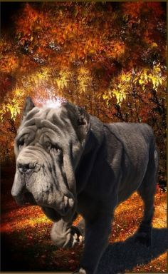 Gianni Neapolitan Mastiffs, Elephant, Animals, Dogs, Animales, Animaux, Neopolitan Mastiff, Animais, Elephants