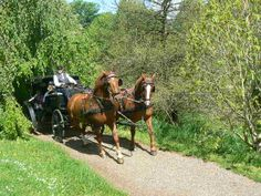 Horse and carriage in #botaniskhave
